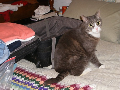 LB Guarding My Suitcase