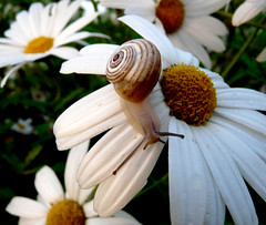 snail at sunrise (Marlis1) Tags: flowers animals dewdrops snail waterdrops anawesomeshot marlis1