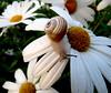 snail at sunrise (Marlis1) Tags: flowers animals dewdrops snail waterdrops anawesomeshot marlis1