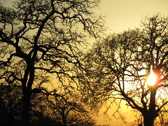 IMG_0543 - tree silhouettes in the setting sun (irene 1919) Tags: sunset tress