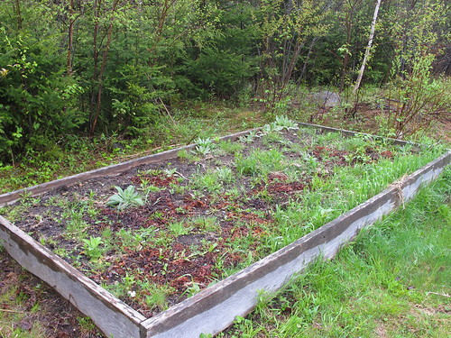 Three Sisters Permaculture Garden (I will be adding a link to my blog which will further explain what I'm doing, later today.)
