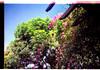 lomo love :) (Natália Viana) Tags: flowers flores brasil lomo lomography natureza natáliaviana aquapix