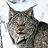 éléments de Lynx canadensis