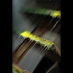 Time (Yorick...) Tags: favorite green movement dof 50mmf18d pleasure eow diamondclassphotographer impressivemood