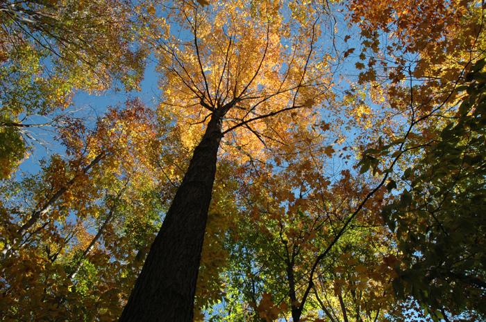 fall hike tree canopy