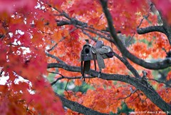 Room for rent... (Hobo W149) Tags: autumn color tree digital season maple nikon colorful dof bokeh birdhouse longisland digitalcamera dslr digi nikkor105mm piratetreasure amazingtalent dofplay d80 hobow149 colourartaward justmeandthecamera piratetreasure2