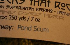 Pond Scum 112607