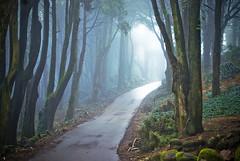 West of the Moon (Lus C) Tags: morning winter light mist tree portugal rain rock forest bravo darkness sintra peninha magicdonkey justimagine princehatundertheground