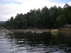 IMGP1116 (spuzzum42) Tags: kayak victoria kayaking brentwoodbay todinlet