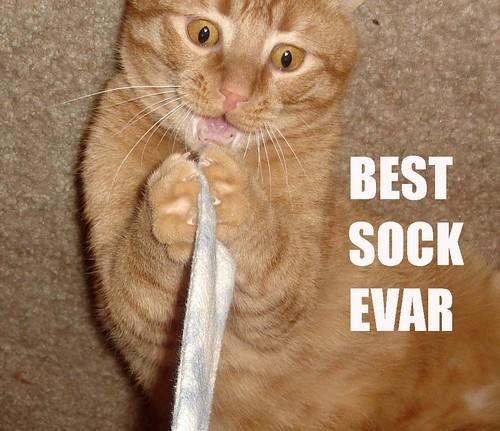 Best Sock Evar