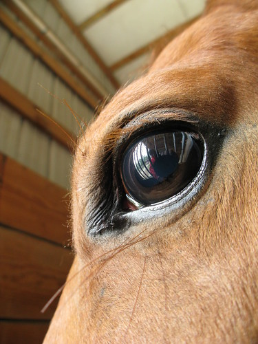 A horse's eye view in Slidell, Louisiana, USA