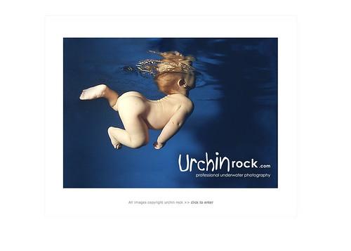Picture 3.jpg-urchin