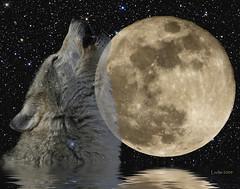 "Full ""Wolf"" Moon - January 22, 2008"