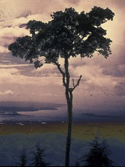 Guatemala Tree (moedonno) Tags: bill guatemala rizzo
