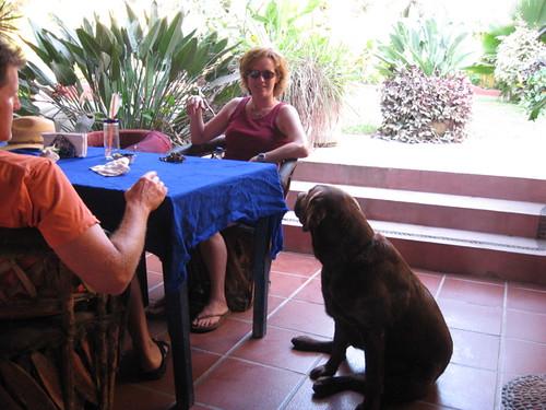 Tia and Toby's dog in Palapa Joe's