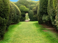 Yew Hedges at Holme Lacy House. (saxonfenken) Tags: trees england topiary wrestling explore superhero unam herefordshire thumbsup 154 e500 twothumbsup supershot impressedbeauty superaplus aplusphoto ultimateshot diamondclassphotographer flickrdiamond incrediblenature theperfectphotographer friendlychallenges yewhedgeyew holmelacyhouse thumbsupwrestling house154 tuw1001 herowinner storybookwinner