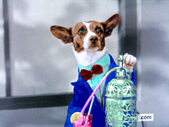 Dog Bartender TV Shot (Walker Dukes) Tags: pink blue shadow red brown cute green window glass look shirt fur nose lemon paw eyes buttons coat straw bowtie cocktail jacket bark bite wedge claws bluegreen k9 mournful