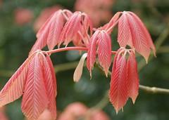 Botanic-Garden-3