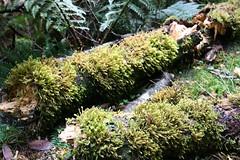 IMG_4844 (Alessandro A) Tags: lake forest waterfall rainforest lookout falls valley tasmania hobart tamar sanddunes launceston worldheritage cradle dovelake lakestclair cradlemountain strahan russellfalls oldgrowthforest mtfield henty franklinriver marionslookout