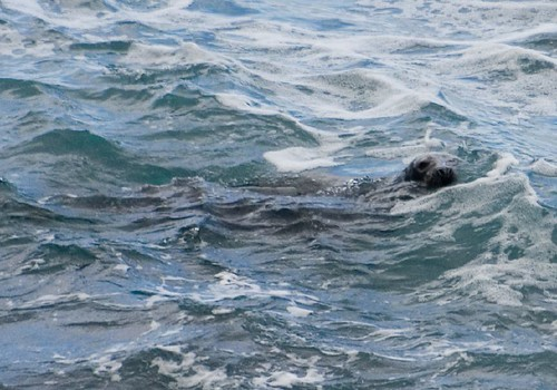 Seal (1)