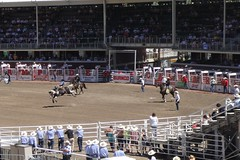 Calgary Stampede Rodeo - Saddle Bronc