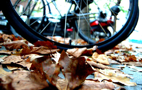 autumn (wheels) makes me feel fine