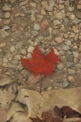 DSC_1011 (Hartaarn) Tags: ontario canada fall fog hiking hike sikh milton singh khalsa kelsopark singhni singhnee