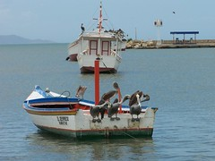 Resting... (jmven) Tags: fish beach birds botes la boat juan kodak playa pajaros bahia margarita galera isla fortin griego z612