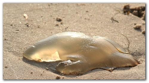 Sad on the sand
