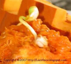2007_10_30_pumpkin_sprout