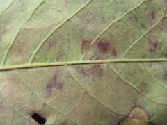 IMG_0389.JPG (d.candice) Tags: macro nature violet vert feuille pourri usé matière fâné