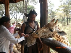 Becky shows me how to feed the giraffes