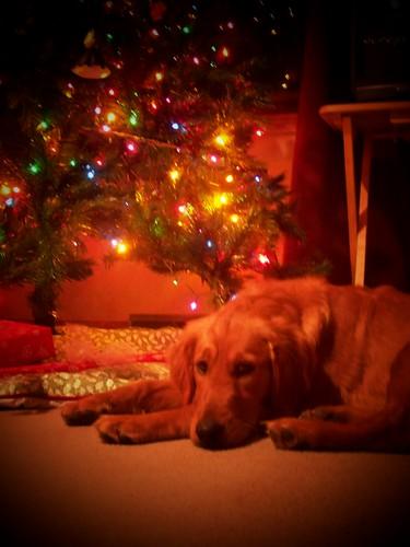 The Christmas Card Shot