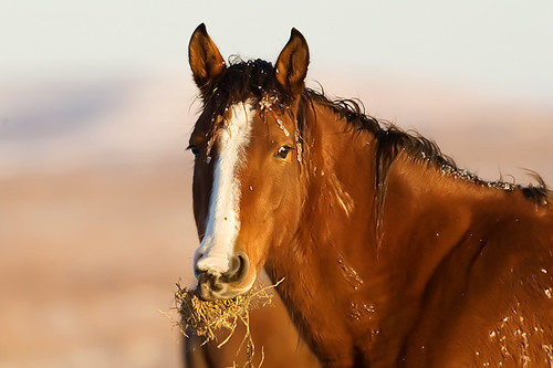 Feeding Horses 158