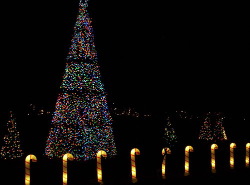 Pnc Festival Of Lights At The Cincinnati Zoo Amp Botanic