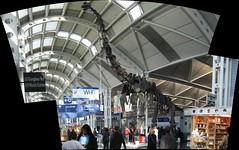 O'Hare Dinosaur - Autostitched (zJMac) Tags: world windows roof light red autostitch sculpture sun chicago reflection metal stone wall standing canon fence skeleton daylight airport shiny colorful day sitting shadows power view dinosaur watching floating sunny ohare indoors multiple hanging lonely placement stitched concourse zjmac