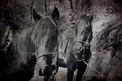 caballos mazamitla enero 2008