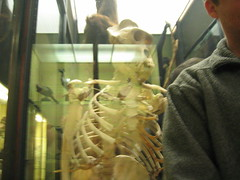 Gorilla Skeleton and James (Greenwise) Tags: museum tring zoological zsl