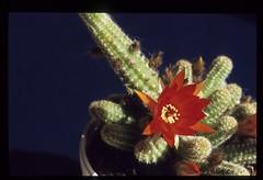 bloemen-024 (Cor Draijer) Tags: bloemen roosendaal mijndert