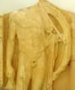 Hoplita, Museu de Cirene