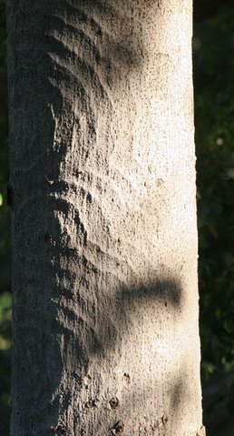 treetrunk pattern lalbagh 010308