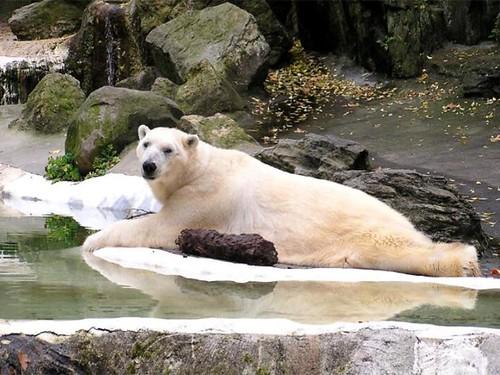 Animales en la nieve en Canada