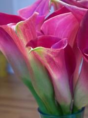 Calla Lilies (jellybeanjill13) Tags: flowers 15fav usa chicago illinois condo newhome calalillies