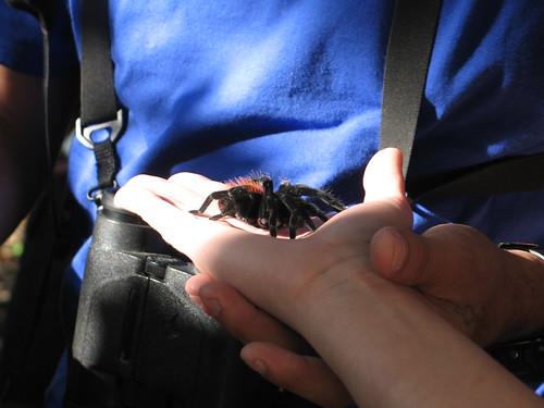Jessica, holding a tarantula