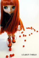 Louison sur le chemin des petites tomates (  Pounkie  ) Tags: blythe mm blanc takara petitestomates ixtee modmolly louisonthistle louisonlespetitestomates