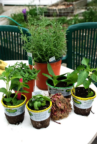 Plants for the Garden