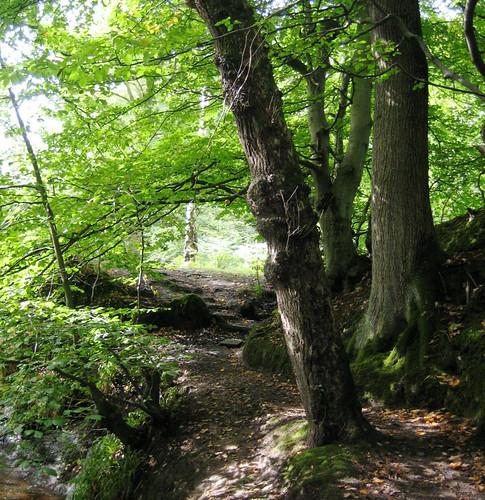 West Kilbride Glen