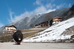 walk (sumo4fun) Tags: urlaub zillertal street kaltenbach austria sumo4fun hängebauchschwein 2017 alps snow
