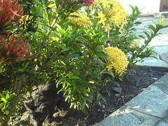 playing in the garden (Marie Dujour) Tags: me garden flor kitty gato jardim gatito pequeno florzinha fenrir