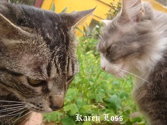 the cats latest album (worthless key) Tags: mywinners kittyschoice camfjan08